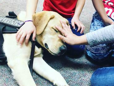 service dog on a therapy visit with the children at school